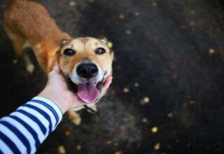O guia definitivo de arrecadação de fundos para a causa animal